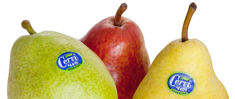 Imagen de la fruta